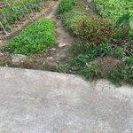 Bán đất gần tường tiểu học xã bắc sơn