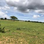 Cần bán lô đất vườn tại xã bình tân dt 5871m2 cách liên huyện chỉ 100m
