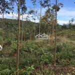 Bán trang trại nông nghiệp 508ha di linh lâm đồng