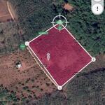 2ha đất trồng café, 150m mặt tiền đường bê tông giá rẻ chỉ 1.5 tỷ.