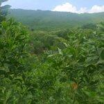 đất rừng sx thanh sơn, phú thọ 200ha, giá bán 16 tỷ