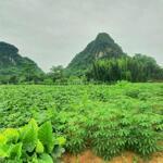 Cần bán gấp mảnh đất hơn 3642m2 có 2000m2 đất thổ cư tại Tú Sơn, Kim Bôi, Hòa Bình