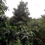 Cần cho thuê 6.300m đất vườn đang cho trái