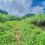 Bán đất tân lạc 1600m bám đường liên xã, cơ hội đầu tư sinh lời