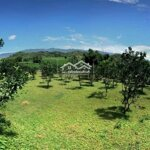 Chính chủ gửi bán 2768m2 nhà sàn, full bưởi view thảo nguyên xanh bát ngát bao la
