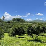 Bán đất trang trại nghỉ dưỡng tại đông lai_tân lạc_hb.dt 15.000m có 400 tc giá chỉ 1,4 tỷ lh 0982876689