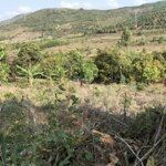 đất vườn sinh thái nghỉ dưỡng 15300m2 diên khánh khánh hoà