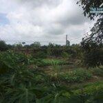 Bán đất nhà vườn trang trại 2558m giá 3.x tỷ tại du lễ , kiến thụy , hải phòng