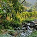 Cực rẻ, bán 100 ha đất atan lạc làm trang trại hoặc du lịch, 15 tỷ