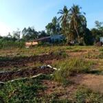 Cần bán đất tặng nhà giá rẻ mt huyện lai vung, đồng tháp