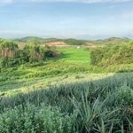 Bán Rẻ Trang Trại Rộng Đẹp Gần Cao Tốc Lạng Giang 30000M2 Giá Chỉ 4.3 Tỷ.