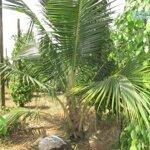 Bán Đất Thị Trấn Định Quán, Có Vườn Dừa Xiêm, Khu Dân Cư Đông, Đồng Nai