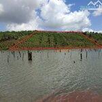 3.7 ha có 300m giáp hồ lớn, đường bê tông, nở hậu giá chỉ 3.2 tỷ, nguồn thu tốt.