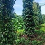 đất nông nghiệp tại daknong, diện tích 2,2ha