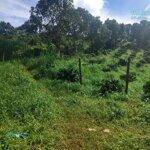 Bán 1ha đất cà phê tại tỉnh dak nong cách thị xã 20km