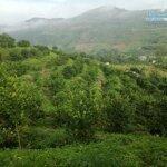 Bán gấp lô đất diện tích 6ha toàn bộ là đất rừng sản xuất view thoáng giá rẻ