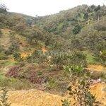 Đất Vườn Diện Tích Lớn, Giá Mềm, View Đẹp