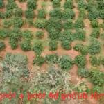 Chính chủ cần bán 30m đất mt đường bê tông huyện tuy đức, đắk nông