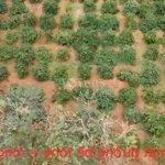 Bán 30m đấtmặt tiềnđường bên tông huyện tuy đức