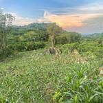 Bán đất tân lạc siêu phẩm hiếm có khó tìm hơn 7000m2 có 400m2 thổ cư bám suối