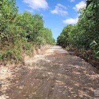 Bán rẫy 4484 trồng Keo đường 6m ở Khánh Phú Khánh Vĩnh LH: 0794596866