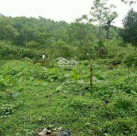 Cực rẻ Bán gấp 4Ha tại Thạch Thất- Quốc Oai- Hà Nội, có ao, có cây ăn quả, đường đi thuận tiện LH: 0977265261