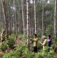 Cần tiền bán gấp đất trồng cây cao sản 10ha LH: 0916258292