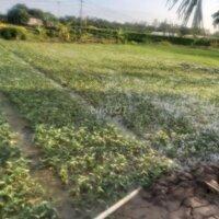 Cần bán 5000m2 đất trang trại tại Tràng Cát LH: 0983510045