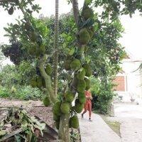 Đất thổ cư 570m2 có nhà ao vườn Bát Trang An Lão LH: 0396518309