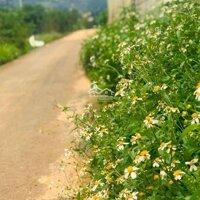Đất vườn nghỉ dưỡng ngoại ô Đà Lạt LH: 0972083579