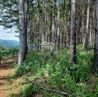 Đất giáp rừng thông xây trang trại nhà nghỉ gần Đà Lạt LH: 0367337265