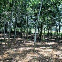 Bán gấp 1000m đất thổ cư tại huyện lương sơnGiá rẻ chỉ 650tr sở hưu ngay lô đất đẹp LH: 0399199668