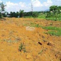 View cánh đồng lúa chín, thoáng đẹp, đất thoải, gần nhiều khu Resort nổi tiếng LH: 0398244677