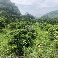 Án gấp 4600m2 đã trồng bưởi,nhãnview cao thoáng phù hợp làm nhà vườn tại lương Sơn,hoà bình LH: 0982567995