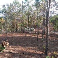 Đất dự án rừng sản xuất 50 năm LH: 0918225335