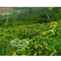 Cần bán đất nông nghiệp giá rẻ huyện Lạc Dương LH: 0935773669