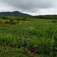 Bán gấp lô đất 630m2 giá rẻ tại Đức Trọng,Lâm Đồng LH: 0915602875