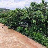 Đất xã Nam Hà,lên dc thổ cư,ngay khu dân cư,750tr LH: 0707192631