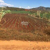 Còn duy nhất mảnh đất Bồng Lai, giá F0 Đức Trọng, Lâm Đồng, giá 165 triệum ngang LH: 0915546903