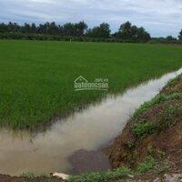 Anh chủ cần bán 7100m2 148x52m đất cây hằng năm Ở xã Tân Hoà, Bến Lức LH: 0933774267