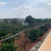 Bán lô đất 3147m2 có 200m2 thổ cư 29m mặt tiền giá 1,45 tỷ tại Nam Hà, Lâm Hà, Mr An 0798766777