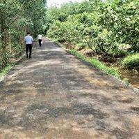 Cần bán 1 ha vườn điều đối diện KCN xã Phước Bình Long Thành, cách khu tái định cư Phước Bình 1,3km LH: 0907016378