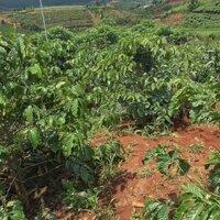 Cần tiền nên bán đất cách Đà Lạt 25km giá rẻ LH: 0989351449