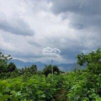 Vườn cây ăn trái đẹp tại Nam Ban , giáp Tp Đà Lạt LH: 0963193904