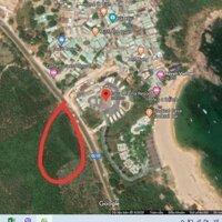 500ngànm2 đất rừng đối diện với resort Casa Marina Diện tích 5000m2 LH: 0965329632
