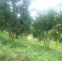 Cần bán nhanh 3ha rừng sx ở Kim Bôi ,HB LH: 0923969668