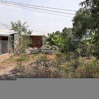 Cần cho thuê đất vườn đang trồng thanh long ruột đ LH: 0854210638
