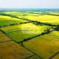 Cần bán đất ruộng 15 công Rạch Quýt LH: 0941111524