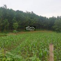 Gấp lô đất cực rẻ 5 ha 50 000m2 ở xã Cao Dương, Lương Sơn, Hoà Bình LH: 0961013866