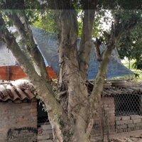 Cần bán đất thổ cư gần ủy ban xã Quang Lịch LH: 0986140812